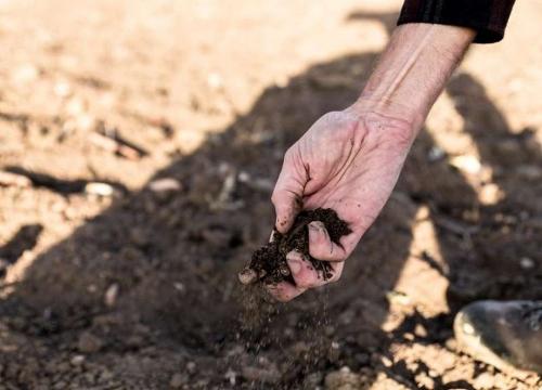 Гибнет на корню. В Аргаяшском районе объявлен режим чрезвычайной ситуации по засухе